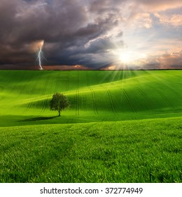 Landscape with tree on green field and lightning in sky, farmland