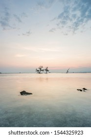 Landscape with tree sea, Lampung