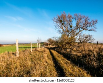landscape with tree and track +in Uckermark, Brandenburg, Germany