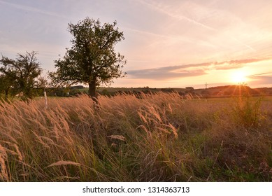 Landscape with a tree under sunset sunlight sky.