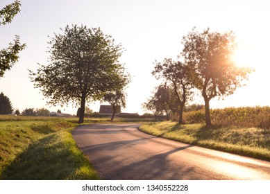 Landscape with trees by road in sunrise shine.