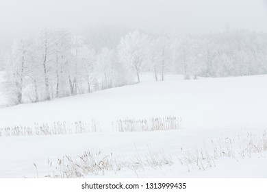 Landscape with trees covered with hoarfrost in a foggy landscape