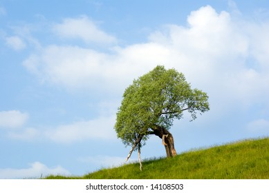 landscape with trees grass and blue sky