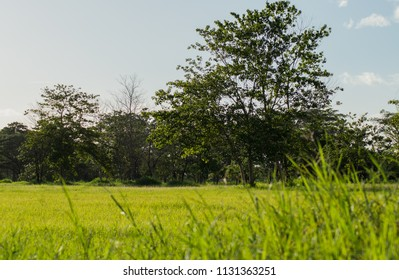 Landscape with trees and green grass on a sunny day