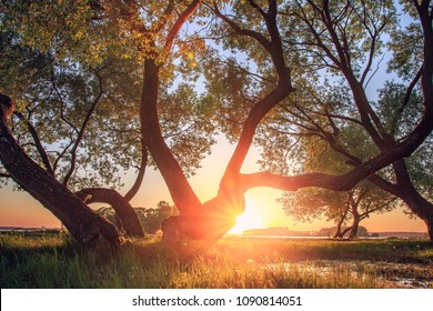 Landscape of trees on lake shore in evening at sunset. Bright red sunlight through branches and tree trunks. Beautiful natural scene of nature at sunset with sun on horizon. Warm sunlight of summer
