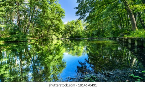 Landscape with trees reflecting, in the water, beautiful summer photography, background. Summer vacation concept.