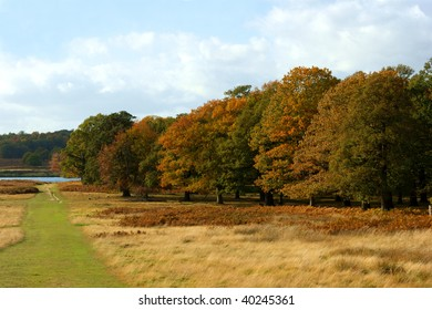 Landscape of trees in Richmond Park, London