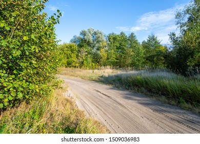 Landscape with trees and sandy dirt road