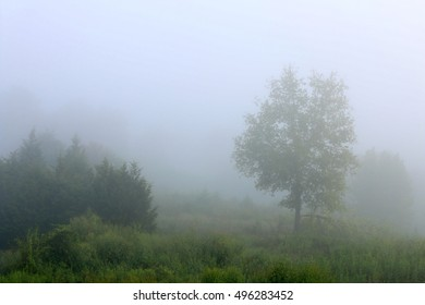 Landscape Of Trees And Small Shrubs Growing In Overgrown Pasture Field Covered In Heavy Morning Fog On A Farm In The Mountains Of South West Virginia