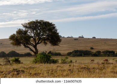 The Landscape of trees and wild animals in the field