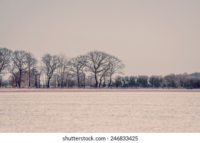 Landscape with trees at wintertime