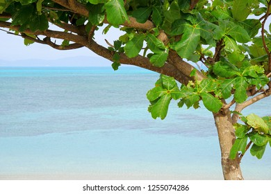 Landscape of the tropical beach