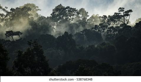 Landscape of Tropical rain forest, Asia