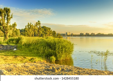 Landscape truncated willow trees with lakeside with reed collar and on the horizon buildings of the Dutch town of Alphen aan den Rijn in the warm sunlight of sunrise during spring