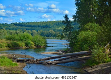 Landscape of trunks in the river, bushes, forest and blue sky Cottonwood Island Park Prince George Canada