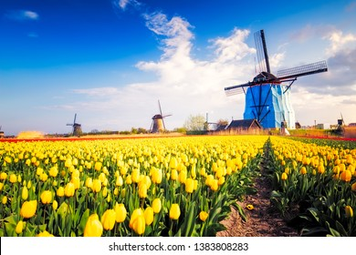 Landscape with tulips, traditional dutch windmills and houses near the canal in Kinderdijk , Netherlands, Europe.