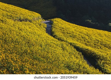 Landscape of Tung Bua Tong forest park with Mexican Sunflower field at sunrise in Doi Mae U Kho, Mae Hong Son, Thailand, Travel winter season concept