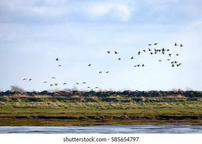 Landscape of the Unesco World Cultural Heritage Waddensea and surrounding with some birds feeding.