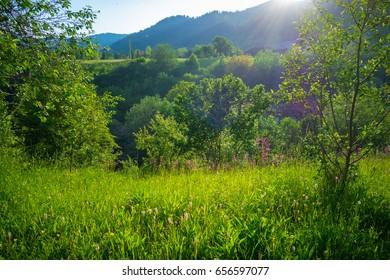 Landscape vegetation in the country side