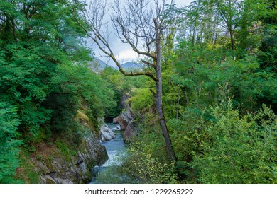 Landscape with the vegetation of the Pyrenees on the French side and the river Ax-les-Thermes near the village of the same name. Ariege France