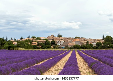 Landscape with vibrant purple Lavender field and small old houses of typical village in Southern France at blooming season