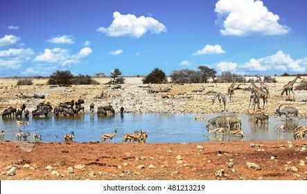 Landscape of a vibrant waterhole  at Okaukeujo in Etosha national park  with dramatic sky