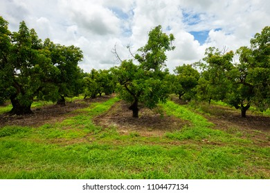 Landscape view of a agricultural avocado grove.