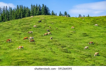 A landscape view of beautiful fresh green valley and herd of cows grazing on a hill , view from a train window, from Switzerland to Austria, in sunny day, summer season.