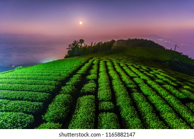 Landscape View of Beautiful Oolong Tea Garden at Night , Alishan, Chiayi, Taiwan