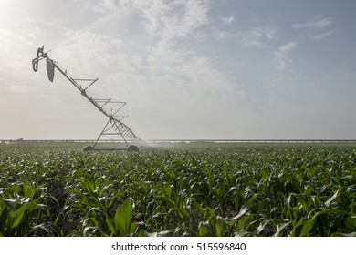 Landscape view of a center pivot system irrigation system working on a corn field.