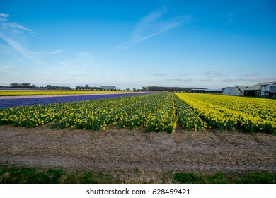 landscape view with colorful flowers background in Netherlands