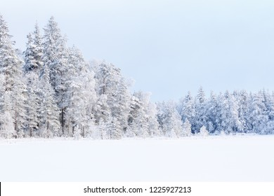 Landscape  view at a coniferous forest with new snow