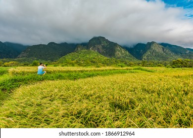 Landscape View Of Diamond Avenue (King Kong Avenue, King Kong Tadao Bike Trails) And Paddy By The Road Next To The Coast Of Pacific Ocean, Taitung, Taiwan