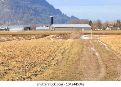 Landscape view of a dormant field during the winter months where vegetables are grown.