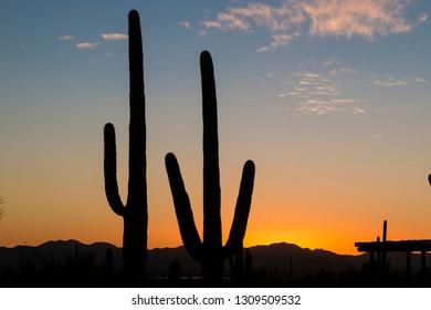 Landscape view during sunset in Saguaro National Park near Tucson, Arizona.