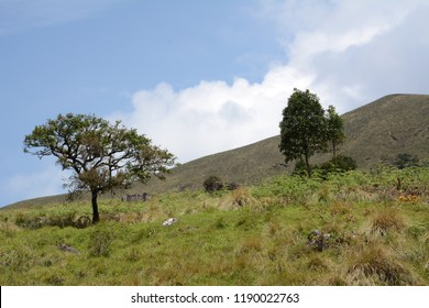 Landscape view of Eravikulam National Park in Munnar, Kerala, India.