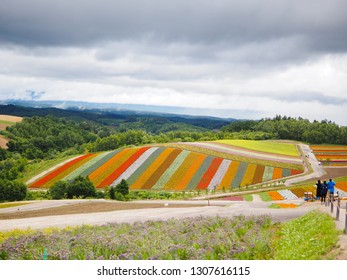 Landscape view of flower bed and mountain in summer of Hokkaido, Japan