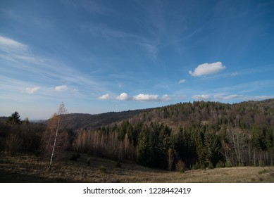 Landscape view of forest in autumn Season
