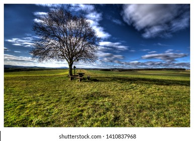 landscape view in franconia with a lonley lime tree