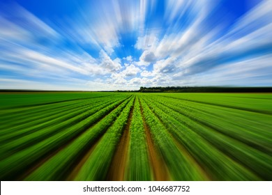 Landscape view of a freshly growing agriculture vegetable field with motion blur.