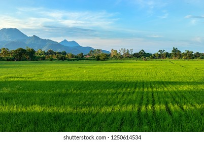 Landscape view of green rice field in northern of Thailand