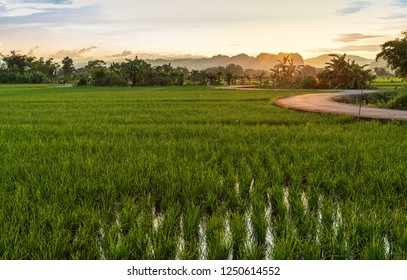 Landscape view of green rice field in sunset time at northern of Thailand