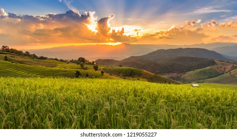 landscape view of   green terraced plantation  paddy rice field in Pa Pong Pieng , Mae Chaem, Chiang Mai, Thailand on sunset time.