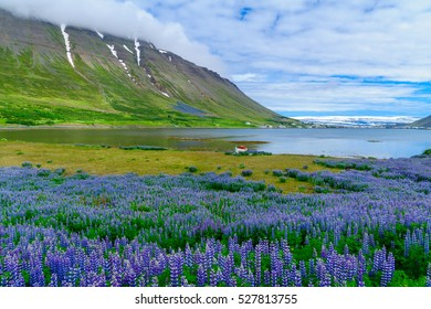 Landscape and view of Isafjordur town, in the west fjords region, Iceland