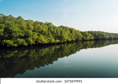 Landscape view, The large Mangrove forest in Thailand and beautiful reflection of many big mangroves, white cloud and clear blue sky on the river.