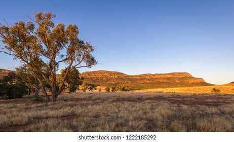 Landscape view in the late afternoon of the Southern Escarpment of Wilpena Pound in the Flinders Ranges, South Australia