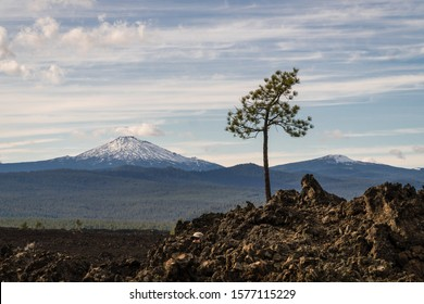 Landscape view of Mt. Bachelor in distance as seem from Newberry Caldera National Monument in Oregon with lone tree on top of volcanic rock in foreground on right.