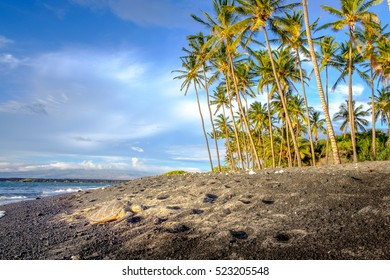 Landscape view of ocean beach with palm trees and sea turtle, Hawaii, USA