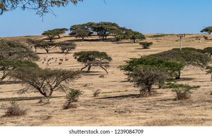 Landscape view on the road from Gondar to the Simien mountains, Ethiopia, Africa