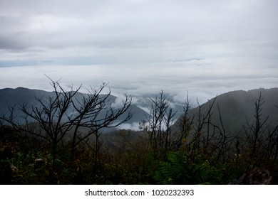 landscape view on top of mountain . fog and cloudy around hill . branch growth at foreground . nature scene in the cold morning winter .